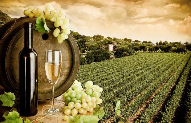 vino spagnolo