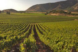 vigne spagna