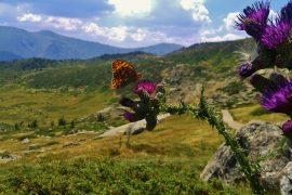 parchi nazionali spagna