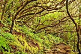 Tenerife: solidarietà' e cura dell'ambiente